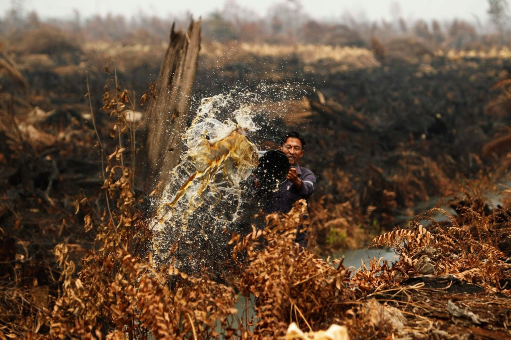 A worker pours water to extinguish a fire burning through his pineapple plantation in Tanah Putih, Riau, on June 26, 2013. (Reuters Photo)