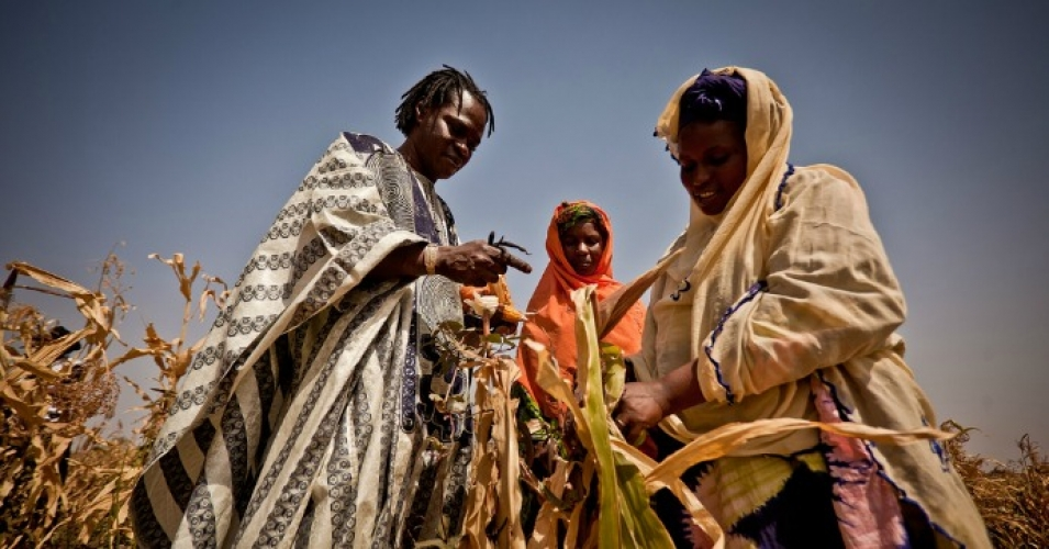 Inspecting failed corn crops in Mauritania. In 2015, Africa was the continent hardest hit by extreme weather events, such as drought and heat waves. (Photo: Oxfam International/cc/flickr)