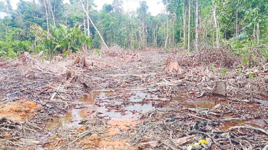 Illegal logging destroys more than the ecology of the jungle. It also affects the lives of animals that inhabit the area, and of indigenous people who rely on the forests.