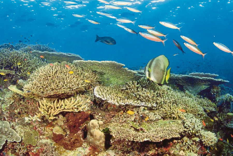 Healthy coral reefs in Semporna. Reefs are areas of high biodiversity, providing food and habitat to marine life, but they are being threatened by rising sea temperatures. PIX COURTESY OF WWF MALAYSIA