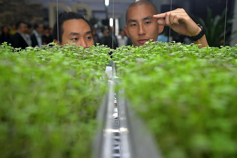 "Microgreens farmers Timothy Jung (left), 28, and Christopher Leow, 29, looking at their close-group farming system at the ""Growing More with Less"" exhibition launched yesterday at The URA Centre in Maxwell Road.ST PHOTO: KUA CHEE SIONG"