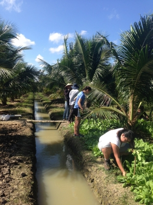 Thúy Tranviet/Provided Students harvest vegetables on a farm in Bến Tre, the Mekong Delta, Vietnam.