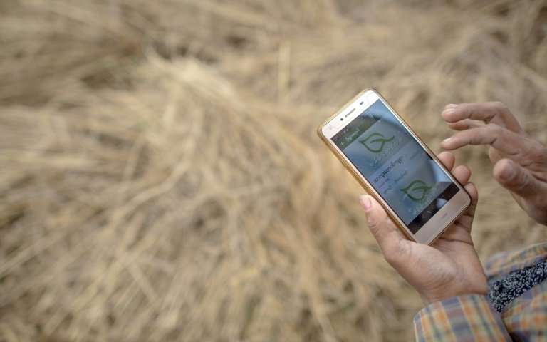 A farmer uses a mobile app, while working in a rice field on the outskirts of Yangon. New smartphone apps are providing farmers with up-to-date information on everything from weather, climate change, crop prices to advice on pesticides and fertilizers