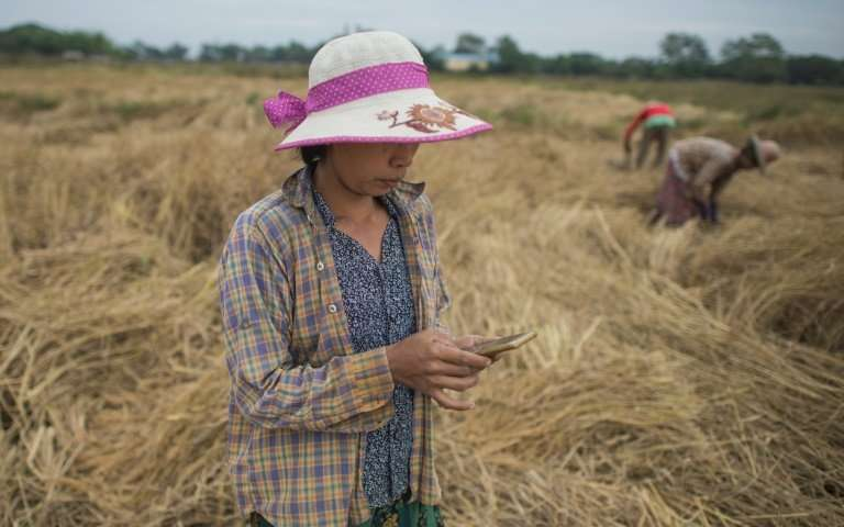 A free app on San San Hla's smartphone is her new weapon in the war against the dreaded stem borer moth that blighted her rice paddy in southern Myanmar for the last two years