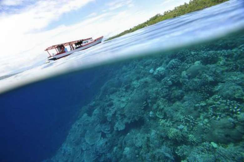 Coral reefs at Indonesia's protected Bunaken Island marine national park on May 14, 2009.PHOTO: AFP