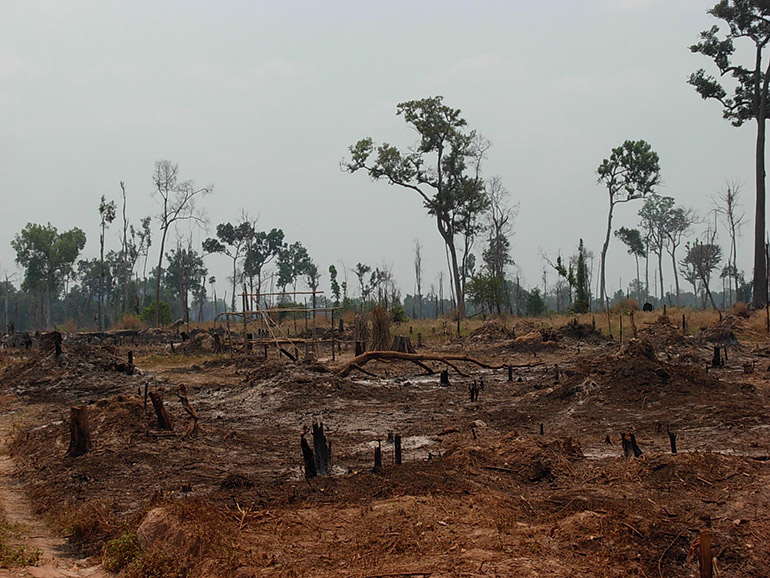 A photograph showing rampant deforestation in Prey Lang, 2014. Photo supplied