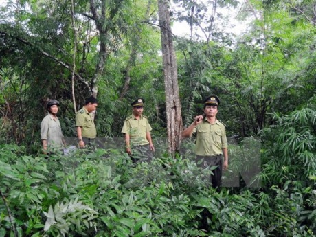 Forest management officials inspect a forest in the northern province of Tuyên Quang. – VNA/VNS Photo Read more at http://vietnamnews.vn/society/374723/vn-sets-goals-for-sustainable-forestry-development.html#Rl7awsPDwgw647Vw.99