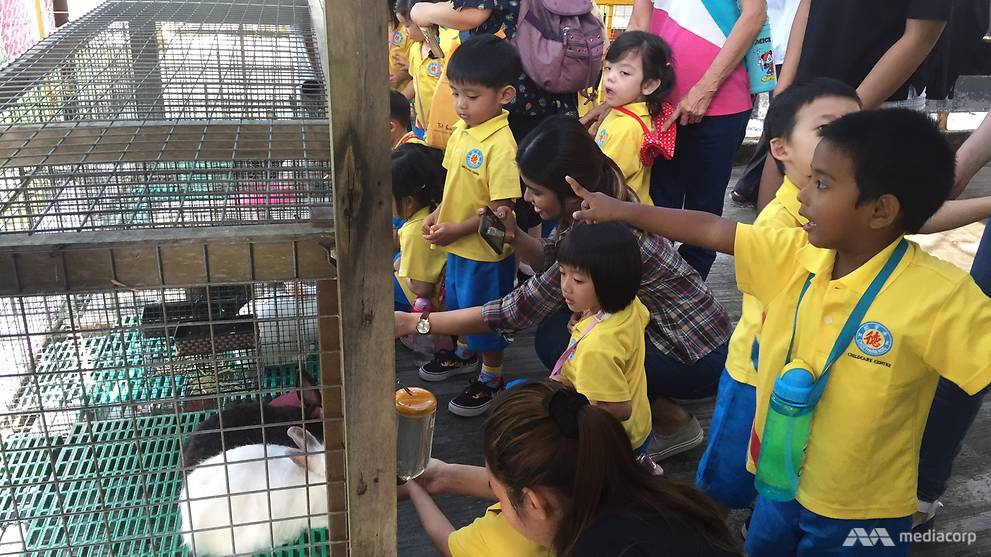 Children on a farm tour, where they interact with animals such as goats and rabbits - a first for many of the students Channel NewsAsia spoke to. (Photo: Wendy Wong)