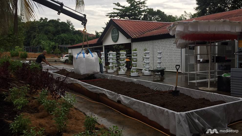 Citizen Farm, which was started in December 2016, uses food waste as fertiliser. (Photo: Wendy Wong)