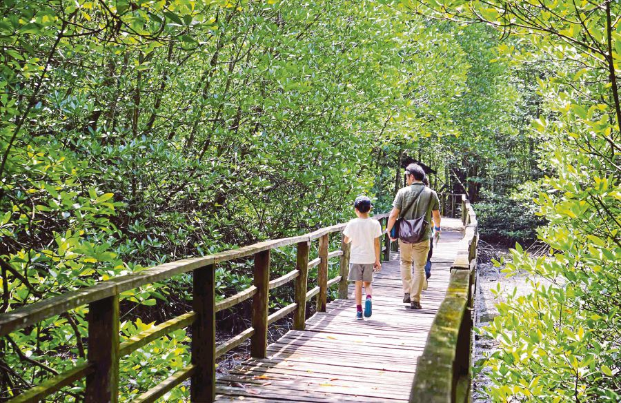 There must be careful consideration when carrying out tourism activities and development work near mangrove areas, especially those designated as Unesco sites. FILE PIC
