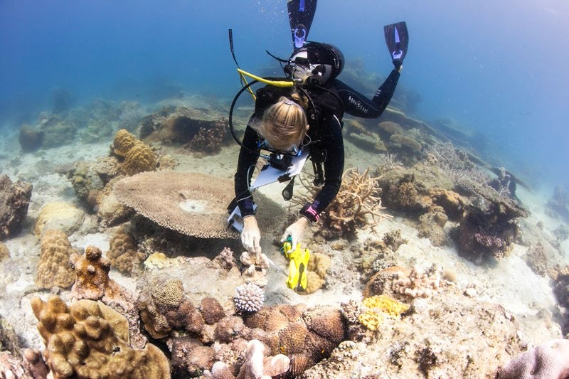 Emily Darling, diving in Madagascar, as she studies coral health. (Emily Darling/WCS)