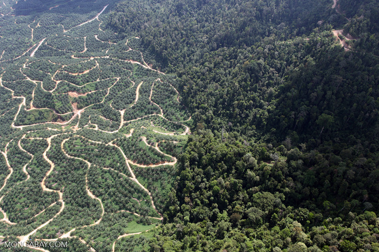 "An oil palm plantation adjacent to tropical forest in Borneo, where a ""triple hotspot for biodiversity, carbon and threat, [means] there is a compelling global case for prioritzing their conservation,"" the scientists write. Photo by Rhett A. Butler"