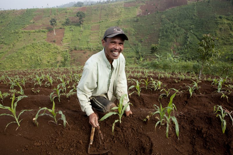 Local farmer, pictured above, in Java Island, Indonesia. (© Jessica Scranton)
