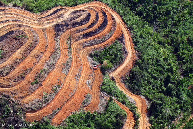 Deforestation for oil palm in Malaysia's Sabah State. Photo by Rhett A. Butler/Mongabay.