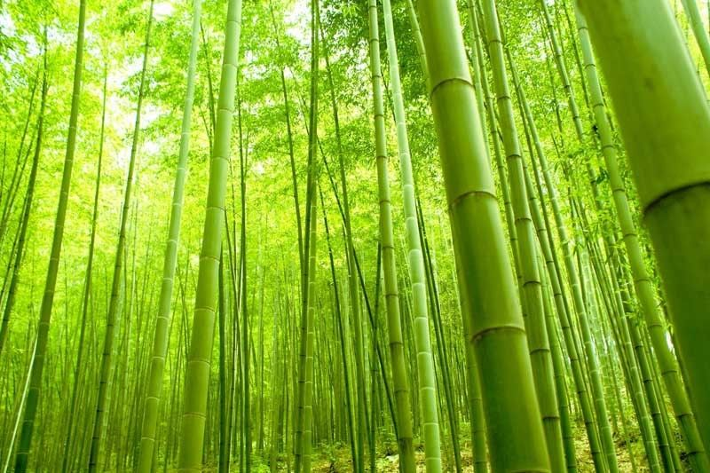 nat3-bamboo-trees 2018-04-16 21-26-56