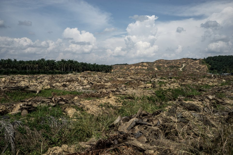 A palm oil plantation encroaches on a wildlife reserve (500sq km) in Malaysia (Picture: Getty Images)