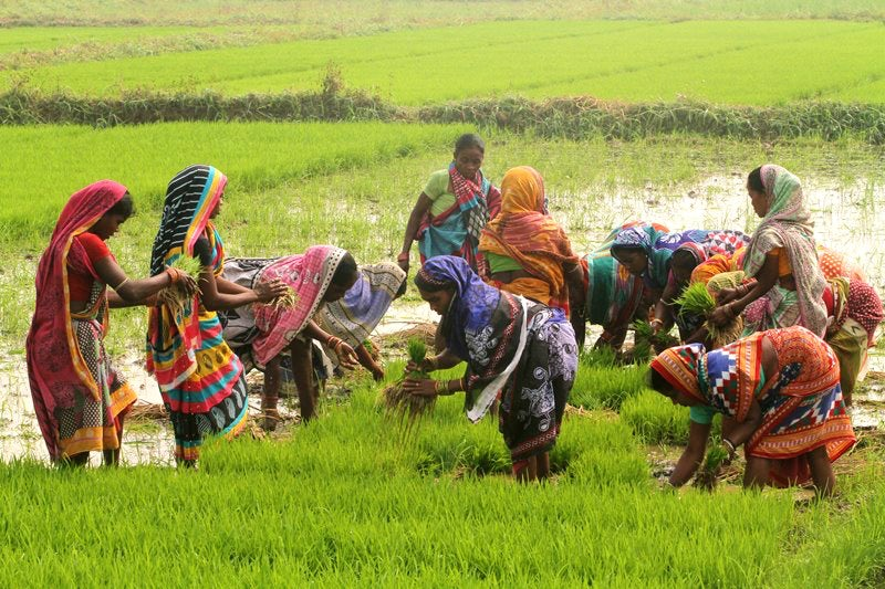 Daily wage women laborers are seen at an agricultural paddy field as they removes paddy saplings before to replant another field outskirts of the eastern Indian state Odisha's capital city Bhubaneswar on 28 January 2018. STR/NurPhoto via Getty Images