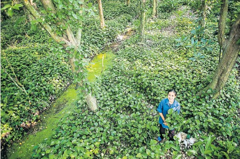 Ubon Sriratanapitak, who grows organic limes and vegetables in Klong Jinda, is working with the Green Net Foundation along with other growers and farmers to establish a local seed bank.