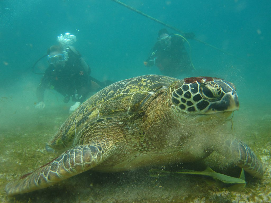 A sea turtle in the Philippines — a symbol for ocean conservation. Pic: Andrew and Annemarie (Flickr CC)