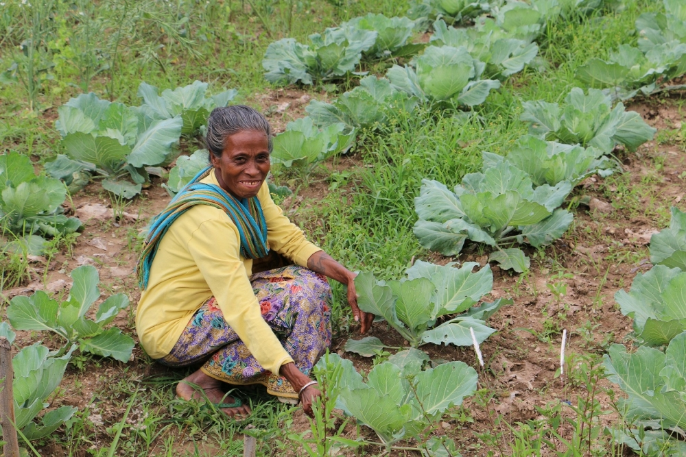 Elsa Da Arujo tends her crop at Hkhmor, Timor Leste