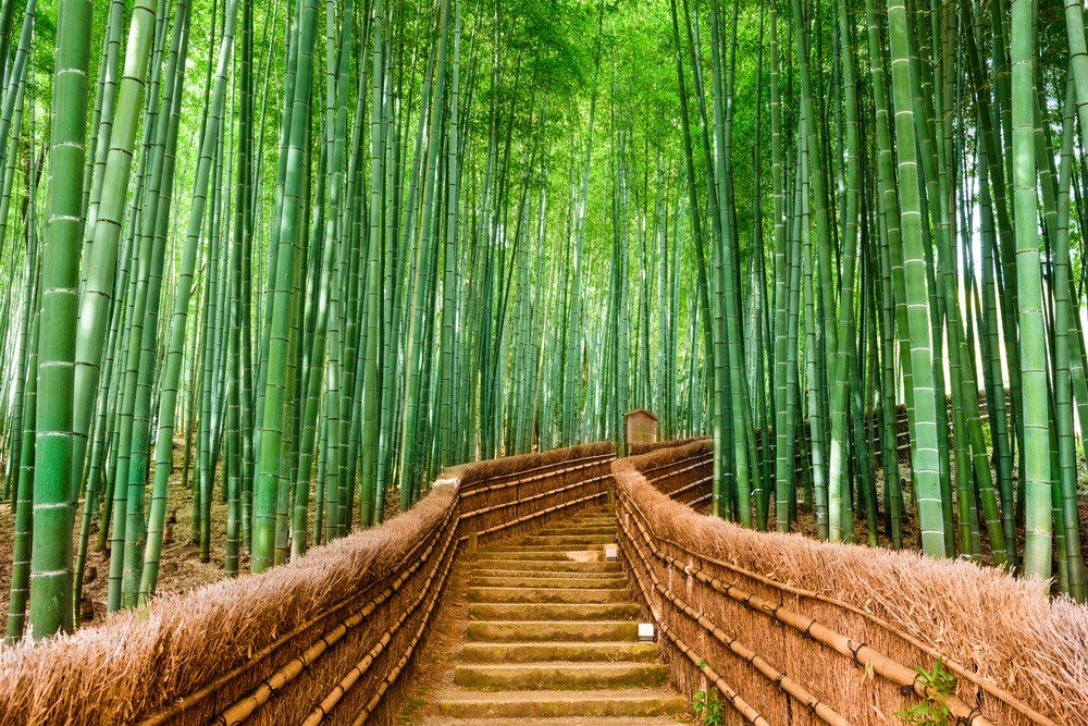 The picturesque Bamboo Forest in Kyoto, Japan. (Shutterstock/File)
