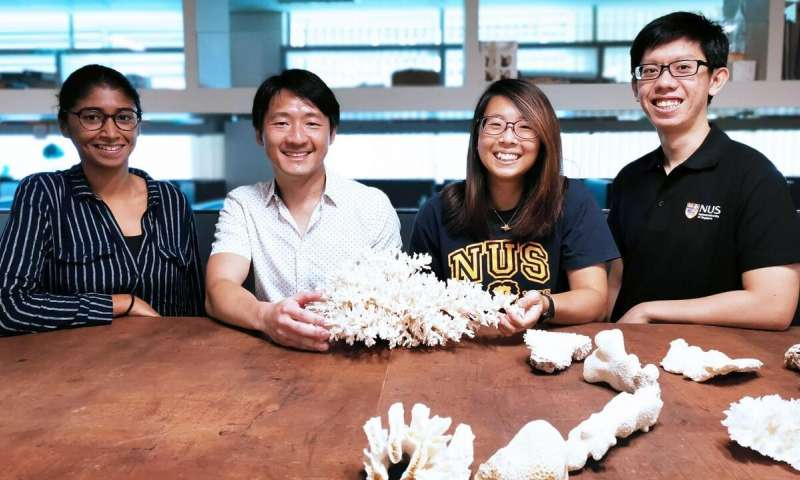 Assistant Professor Huang Danwei (second from left) from the NUS Department of Biological Sciences, together with his team members (from left) Ms Sudhanshi Jain, Ms Gwendolyn Chow, and Mr Samuel Chan, examined nearly 3,000 corals from 124 species at two reef sites in Singapore. Credit: Yip Zhi Ting