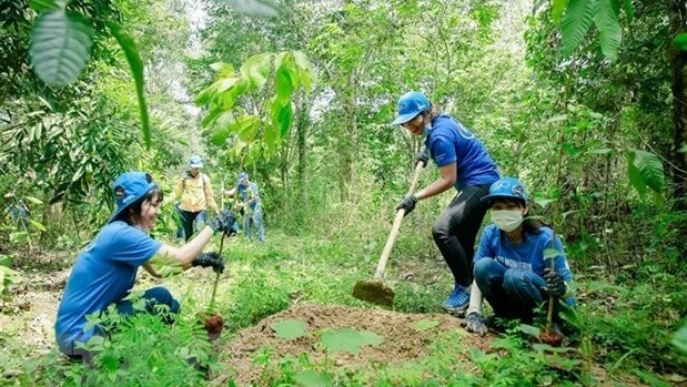 New plants are grown in a forest in the southern province of Dong Nai (Photo: VNA)