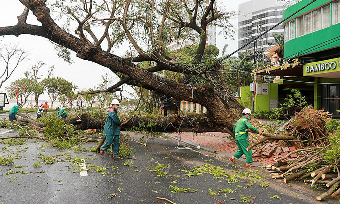 Multiple trees are uprooted by strong winds from storm Molave's onslaught in central Vietnam provinces, October 28, 2020. Photo by VnExpress/Nguyen Dong.