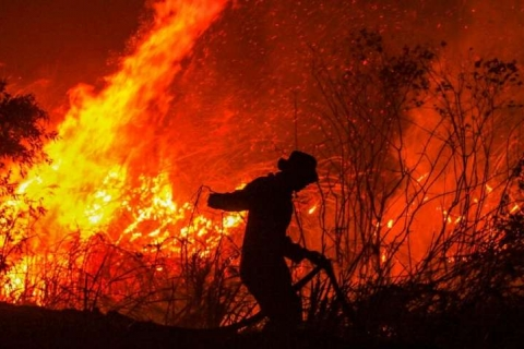 Things to know about palm oil and Indonesia's raging forest fires