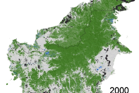 Deforestation in Borneo is slowing, but regulation remains key