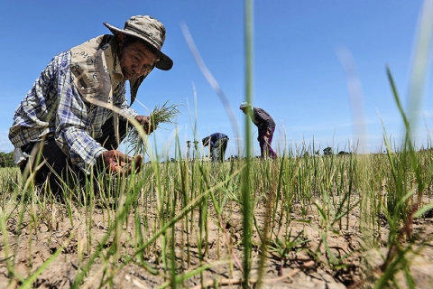 """Worst drought in living memory"", Thai farmers in the north"