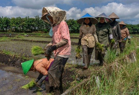 Virus, climate change cause food shortages in parts of Indonesia