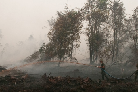 Indonesian government under pressure to stamp out toxic haze