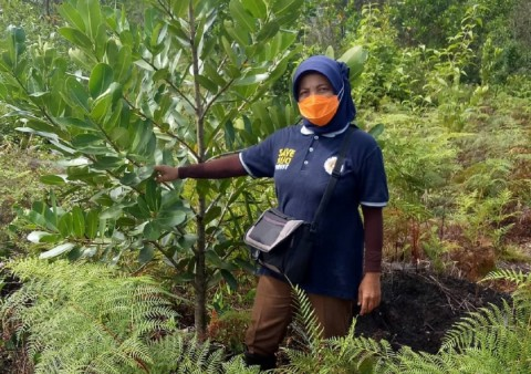 UNEP supports project to restore peatlands in Indonesia