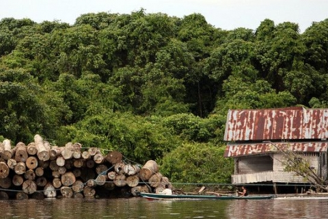 Indonesia Is Reducing Deforestation, but Problem Areas Remain